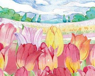 Tulip filelds